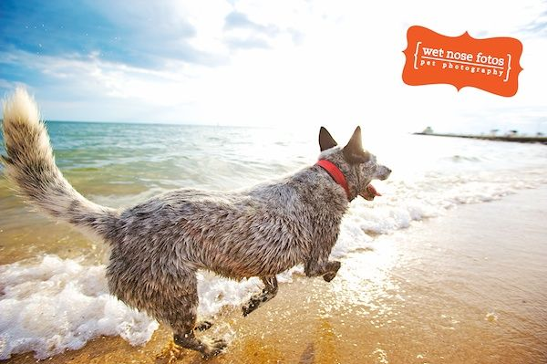 Gina Opening Up On St Kilda Beach Melbourne Victoria Australian Pet Photography By Wet Nose Fotos Animal Photography Photography Workshops Animals
