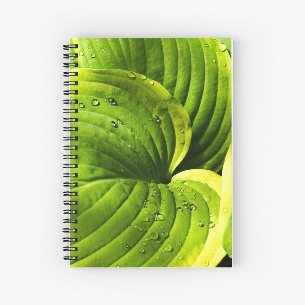 Hosta Leaves Spiral Notebook - Design by AngieC - #notebooks #leaves #Hosta