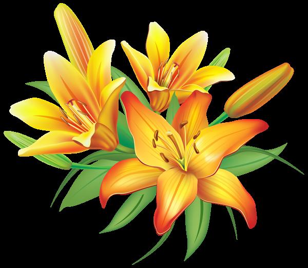 Yellow Lilies Flowers Decoration PNG Clipart Image Képek