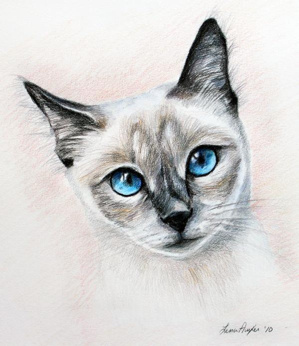 Colour Drawing Cat Design