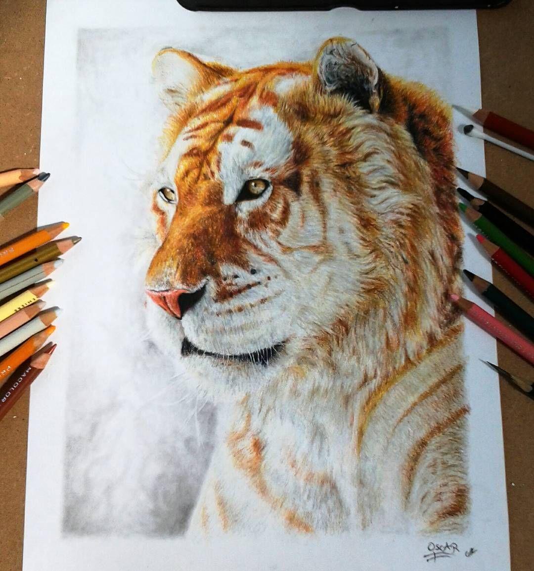 Golden tiger un raro y hermoso animal drawing dibujosanimals