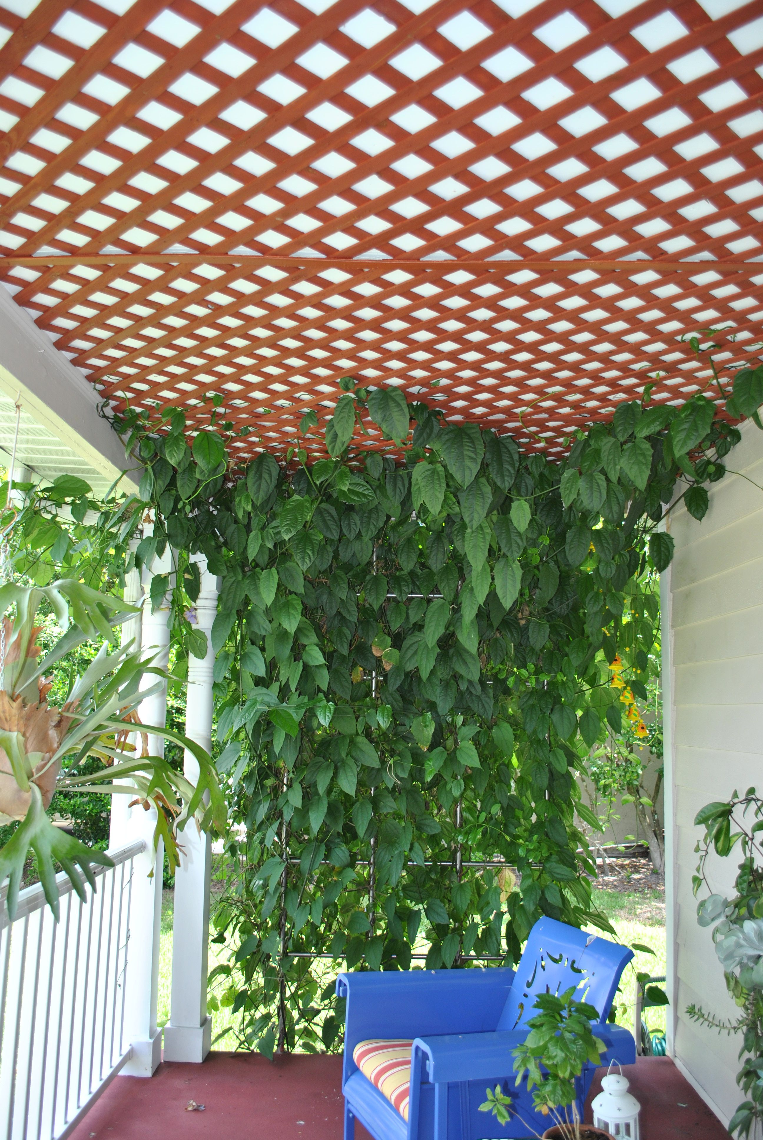 Lattice Work On The Ceiling Of Front Porch Great For