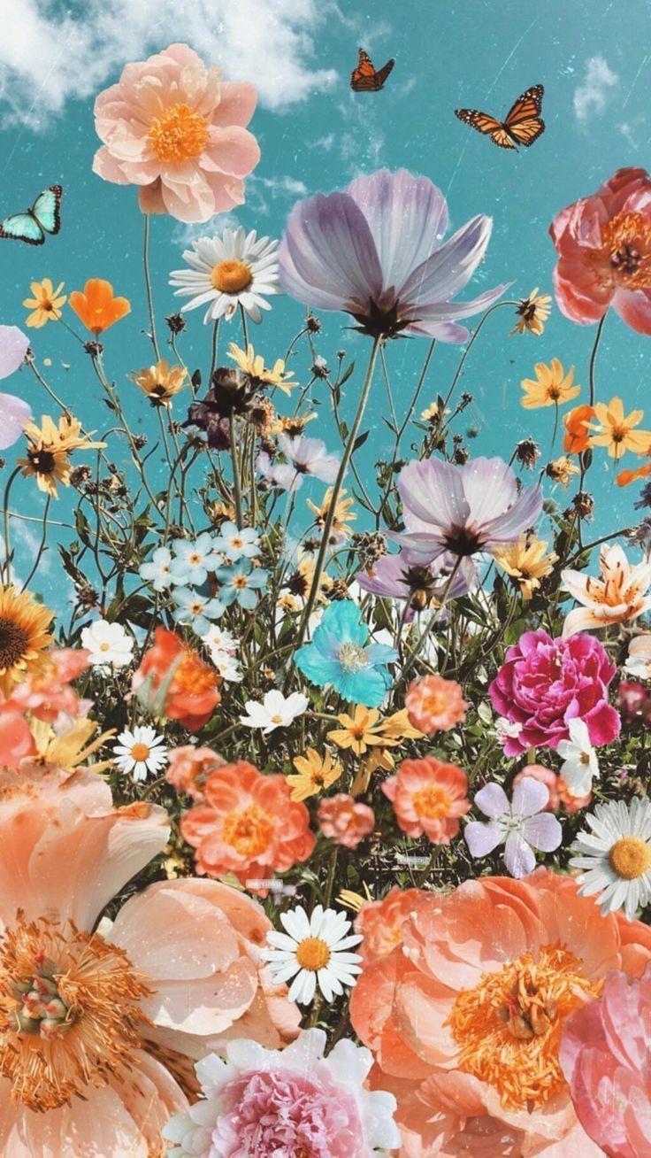 Wallpaper Wallpaper Aesthetic Flowers Butterflies Sky Spring Aestheticwallpaper Flower Iphone Wallpaper Flower Phone Wallpaper Wallpaper Iphone Summer