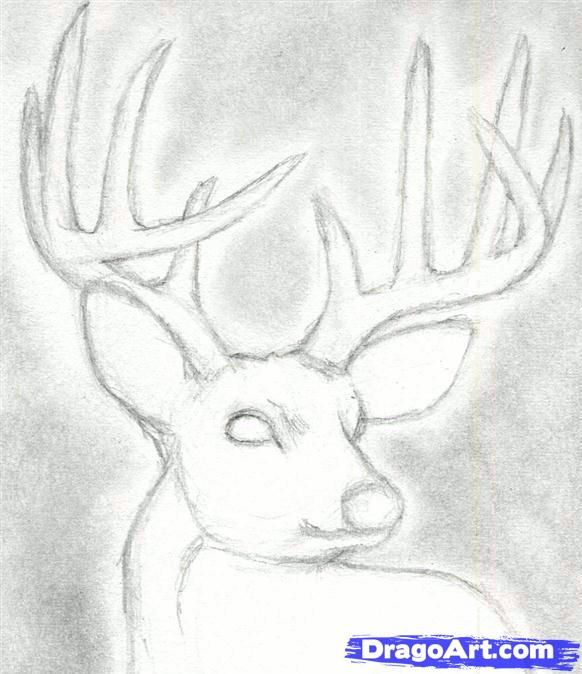 How To Draw A Deer Head Buck Dear Head By Finalprodigy With