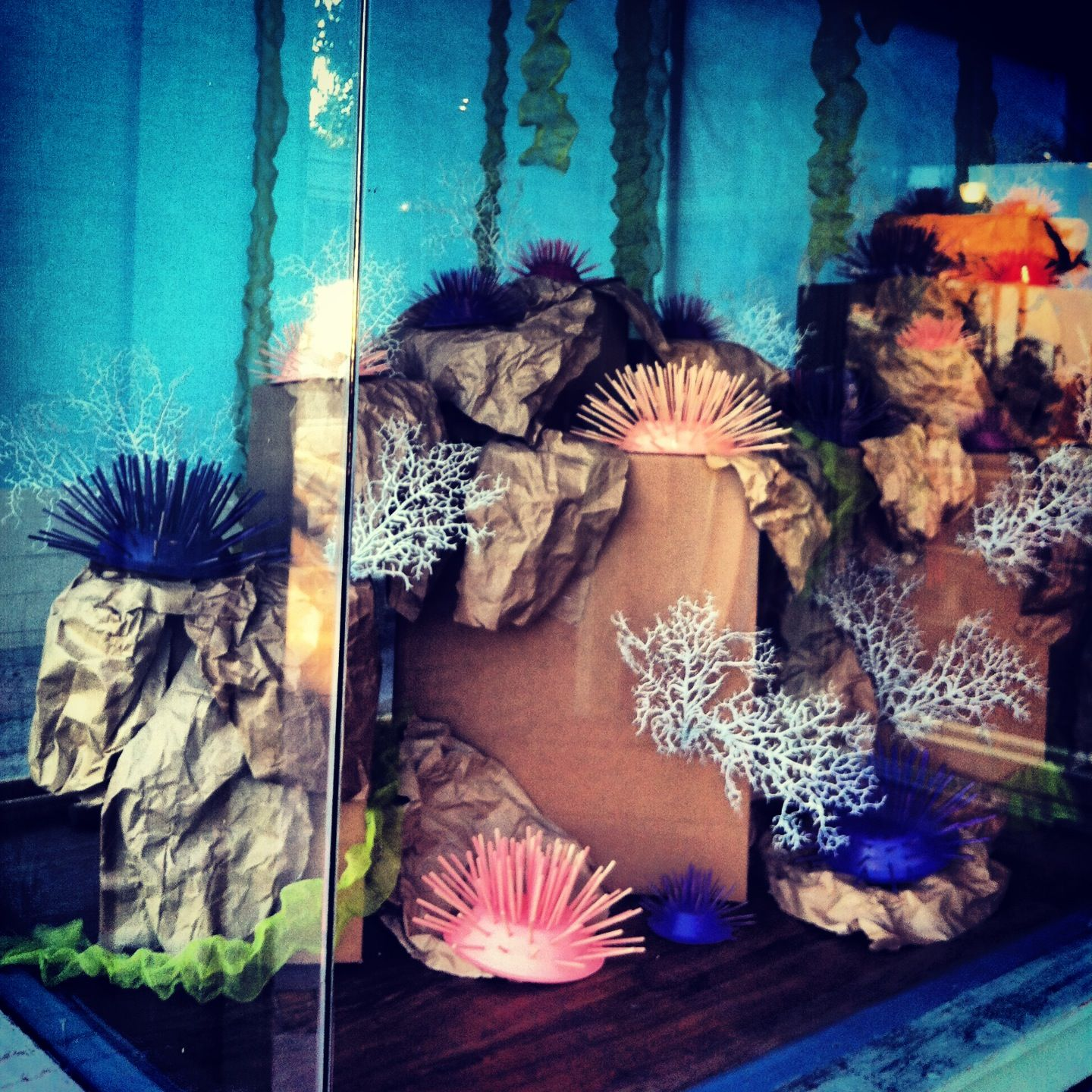Coral Reef Window Display At Toes On The Nose, Laguna