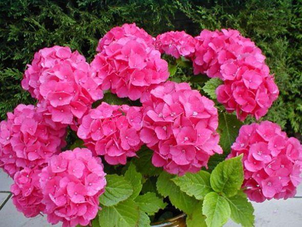 Las 10 flores mas hermosas del mundo flowers pinterest for Las plantas mas bonitas