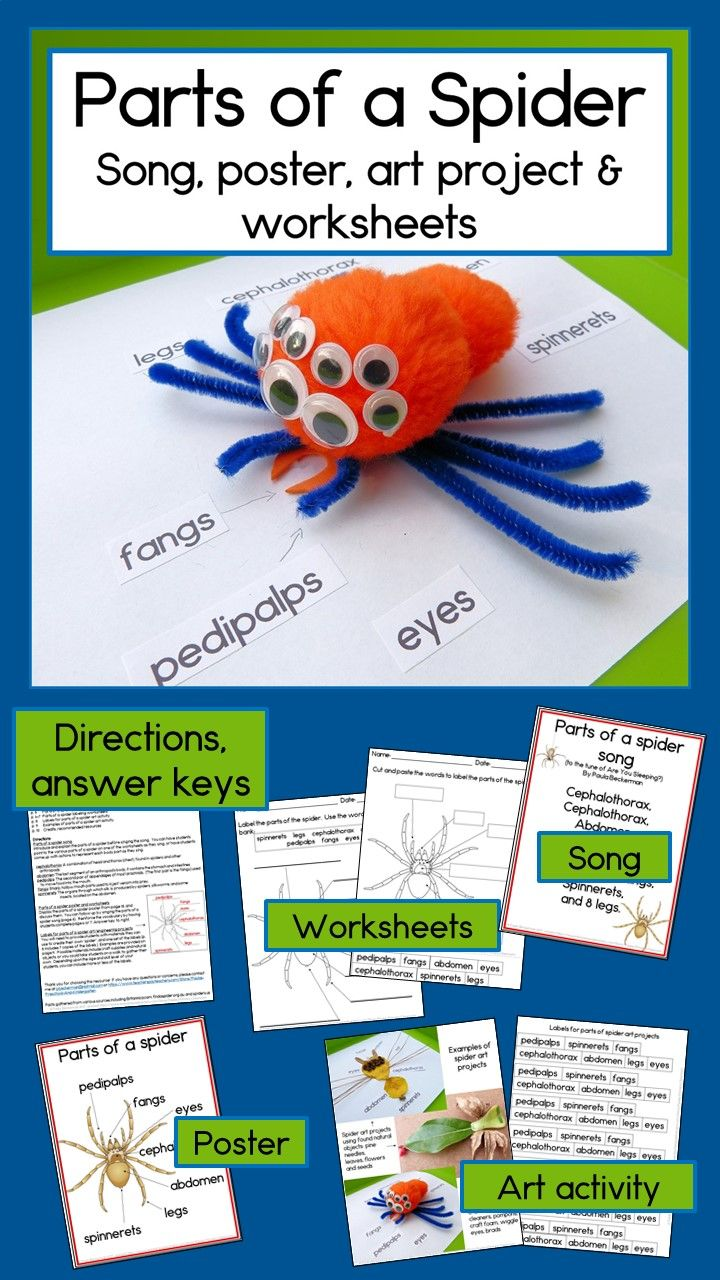Parts of a Spider Worksheets, Song, Poster and Activity ...