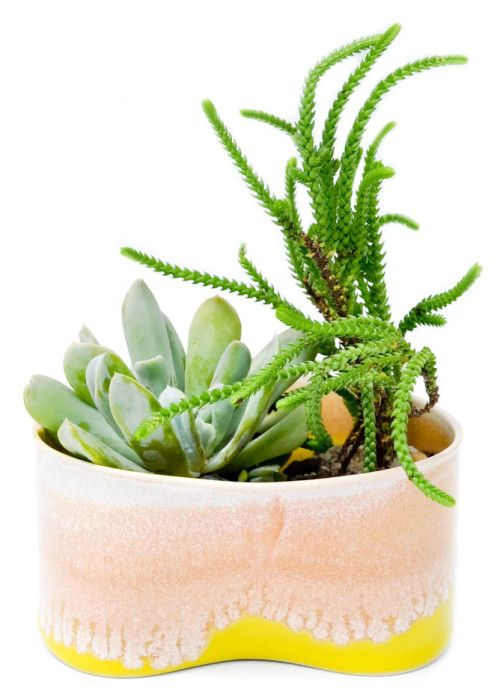 Pinched Glazed Planter Planter Des Fleurs Crassula Et Jardins