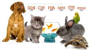 Find Your Favorite Pets Online From The Large Collection Of Pets Dogs Puppy Cat Birds India Bangalore India Kerala To Ow Pet Shop Cow Cat Dog Adoption