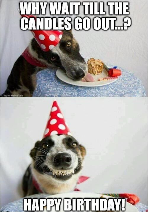 happy birthday belated birthday dog meme Google Search