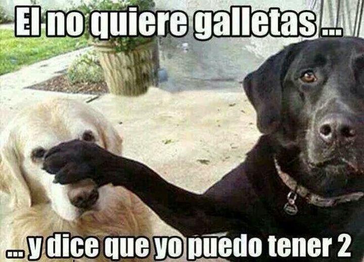 Photo of Memes Graciosos – la galleta