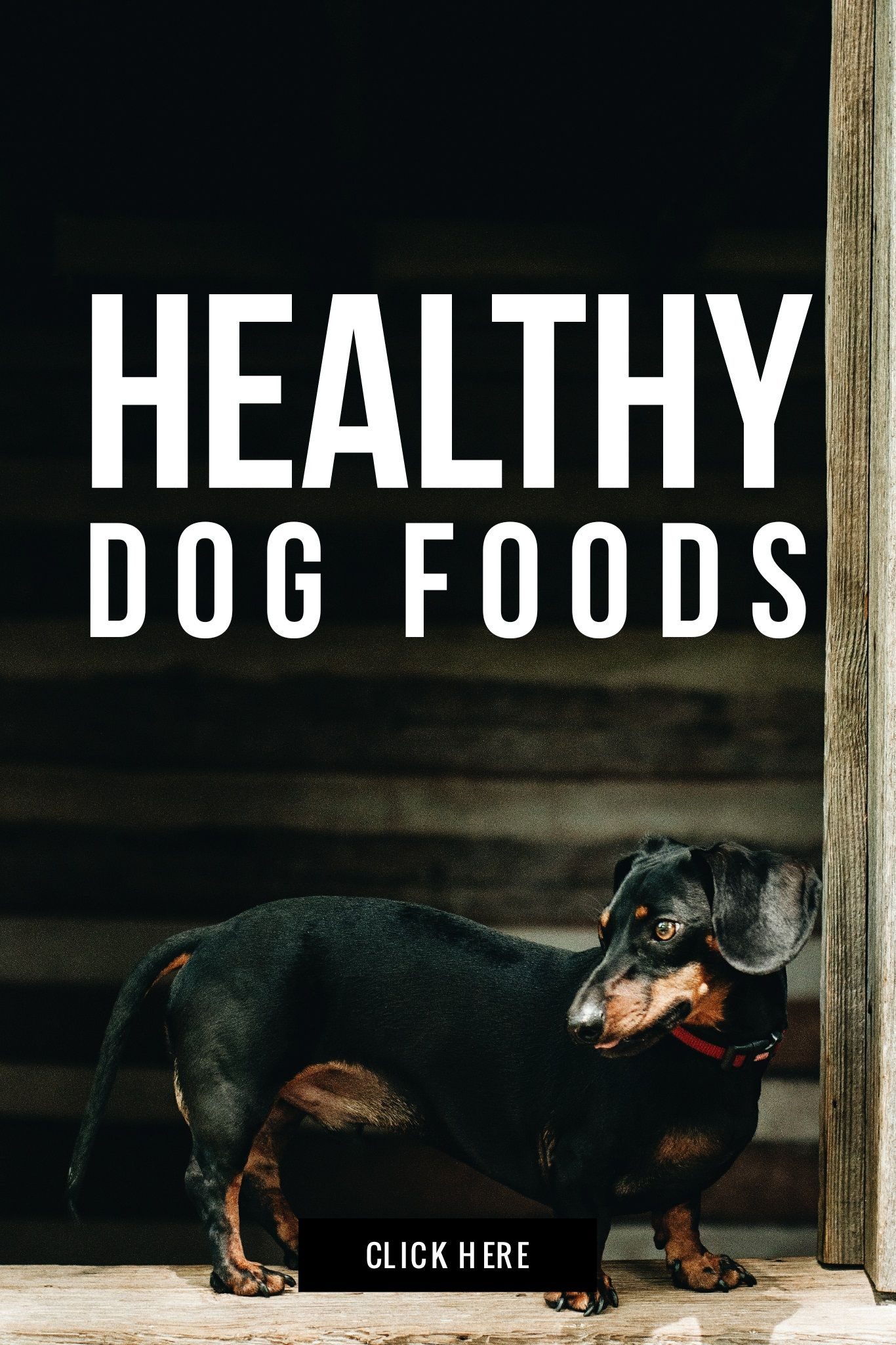 Healthy dog foods for your dog That don't shed For kids
