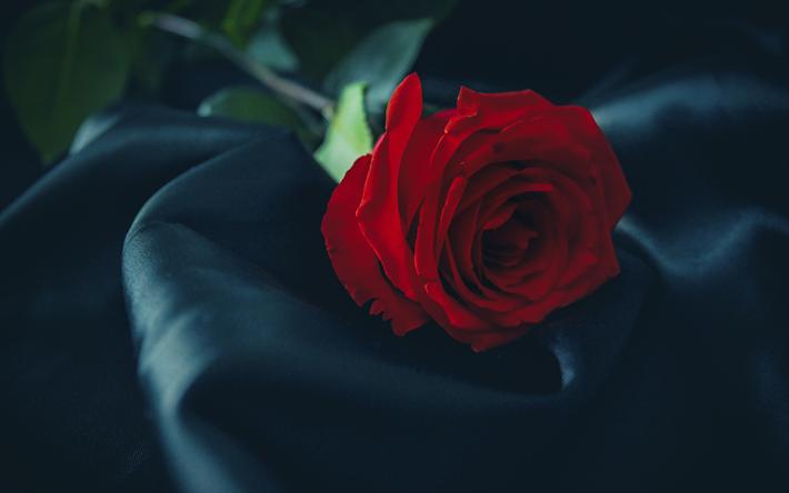 Download wallpapers black silk, red roses, 4k, closeup