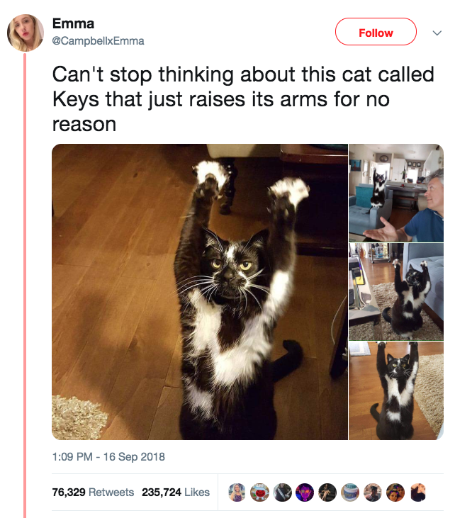 22 Animals Who Are So Freaking Extra They Re An Inspiration To Us All In 2020 Cats Funny Animal Memes Funny Cats