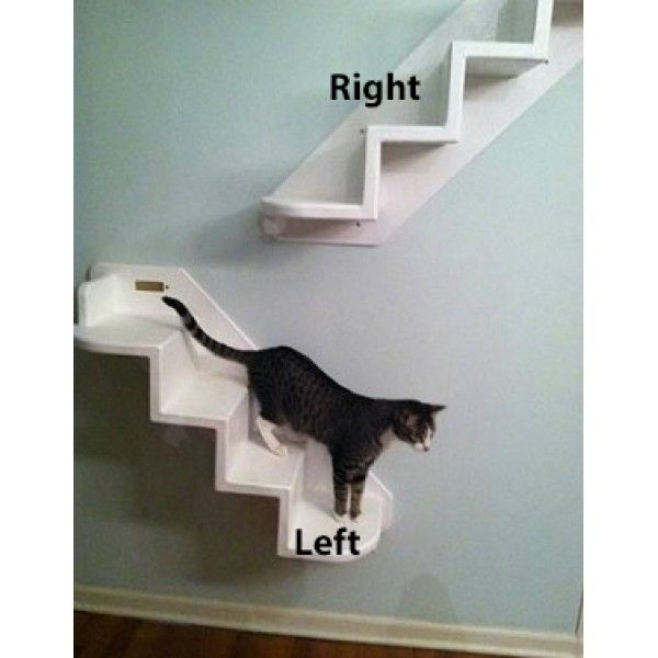 Wall mounted cat stairs cats pinterest cat stairs for Cat tree steps
