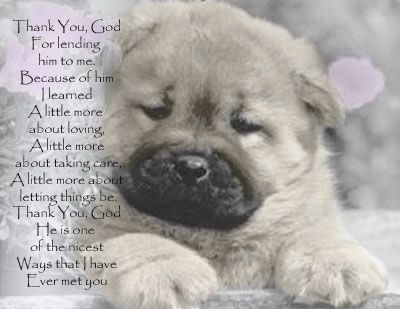 Pet Loss Prayer Little More About Letting Things Be Prayer