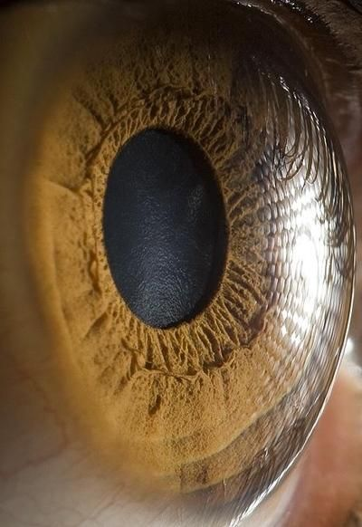 i m amazed by the minute detail on the anatomy of the outer eye