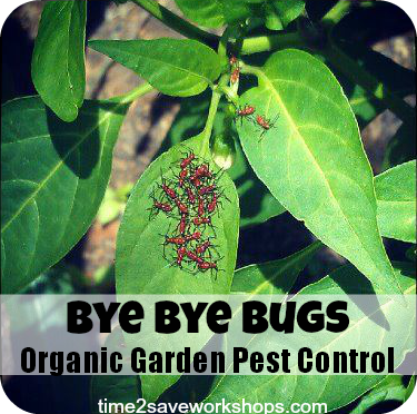bye bye bugs organic vegetable garden pest control. beautiful ideas. Home Design Ideas
