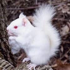 Albinimal (Albino Animal)