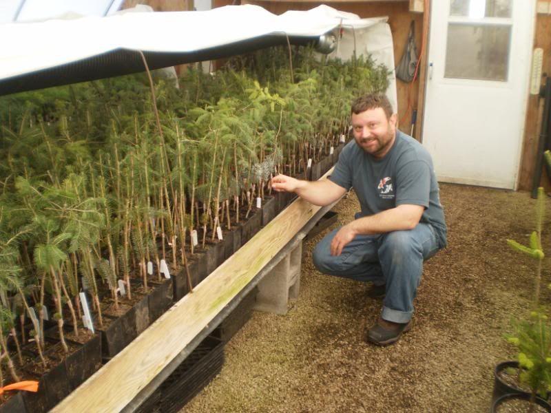 summer grafting conifers - Поиск в Google