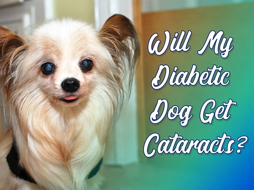 Pin On Dog Health Diabetes