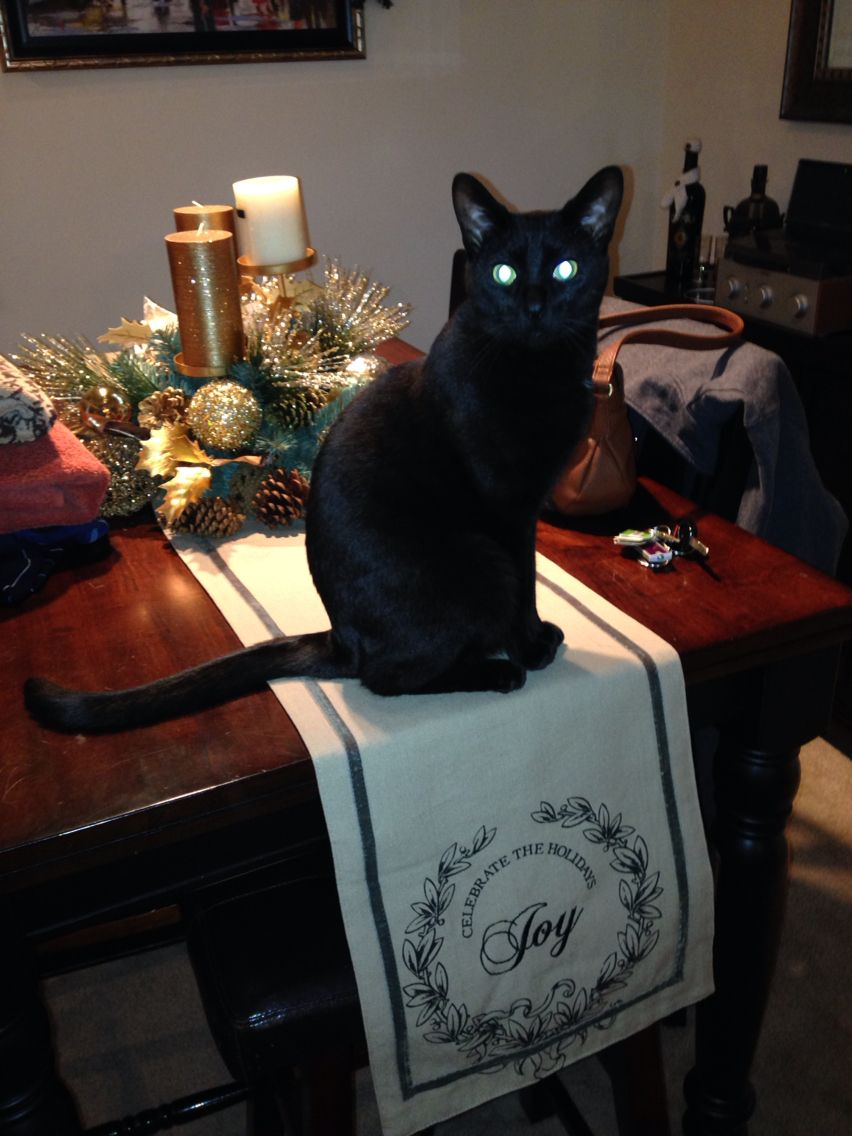 Master Lil Devil Cat