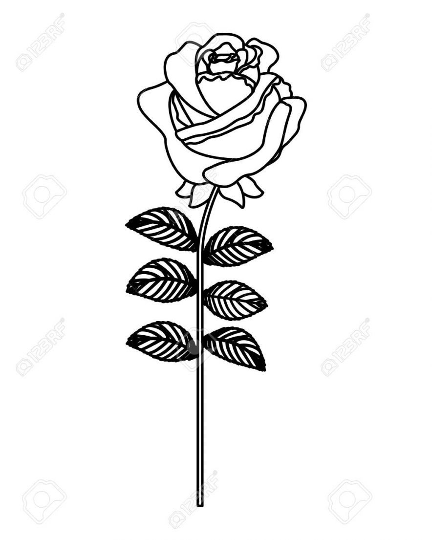 The Modern Rules Of Flower Rose Outline Flower Rose Outline In 2020 Rose Outline Flower Outline Rose Sketch