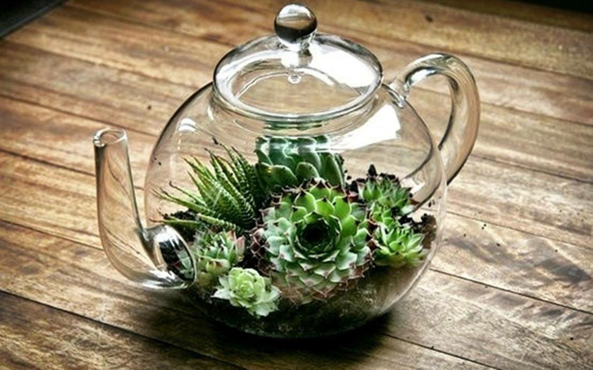 Terrario Per Piante Grasse non puoi perderti questi meravigliosi terrari in vetro!! mi