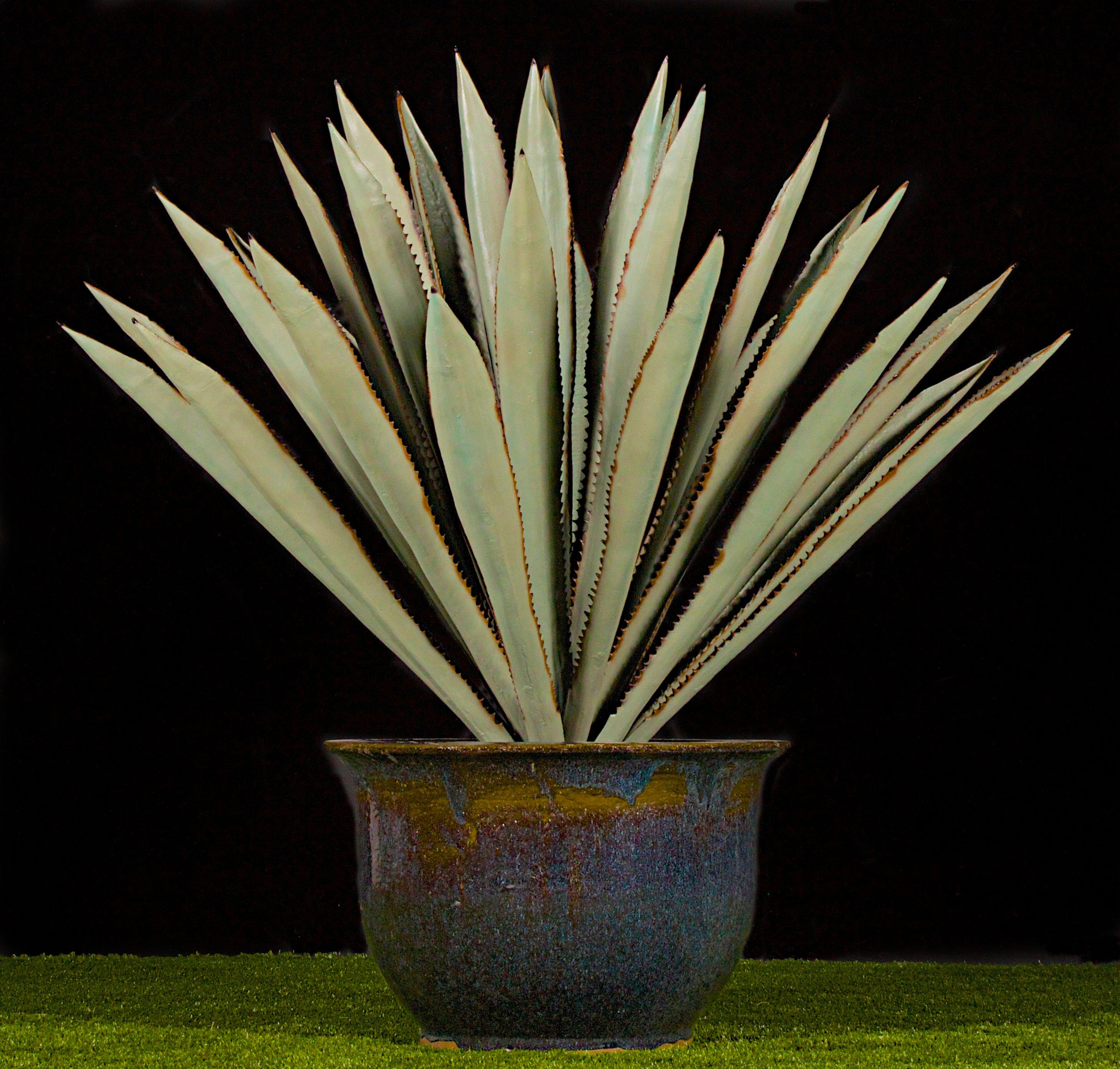 6'x7' fabricated agave plant Agave plant, Plants, Exterior
