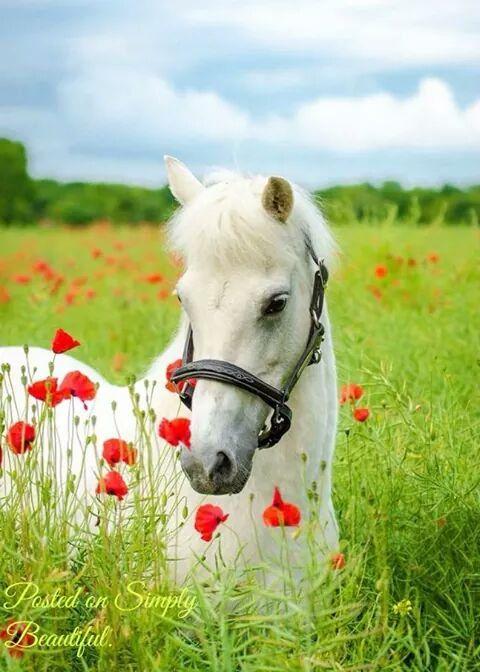 Красивые открытки с лошадью