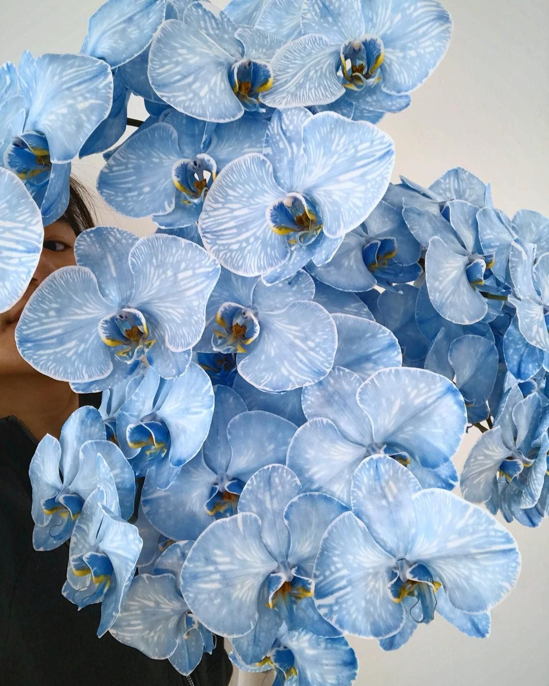 Blue Dyed Phalaenopsis Orchids Gorgeous Flowers Dyed Flowers Orchids Phalaenopsis Orchid