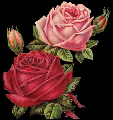 Rosas De Veronica Vintage Roses Rosas Vintage Png Flores Pintadas Laminas De Flores Ilustracion Botanica Vintage