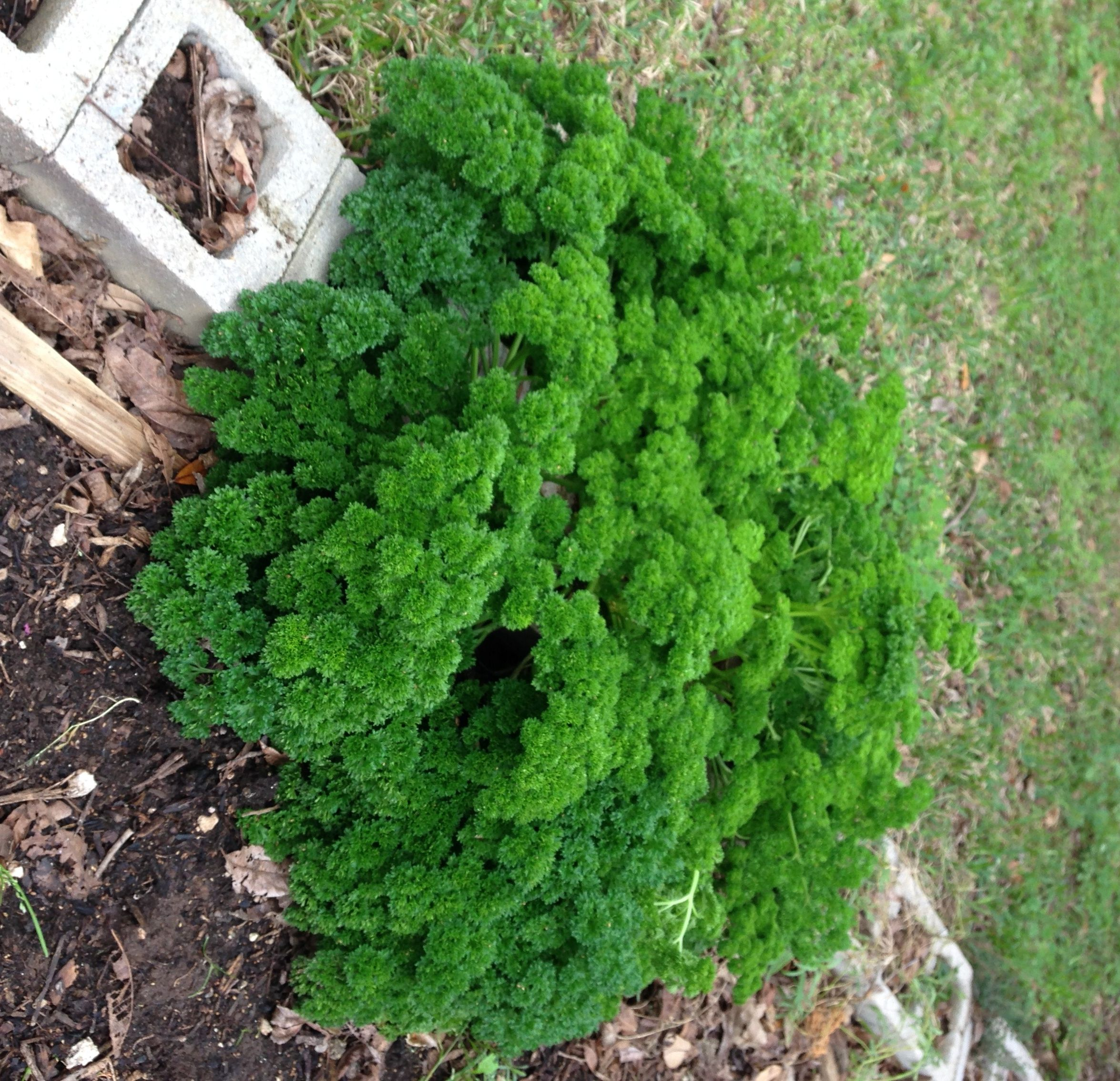 Herb Gardening For Beginners | Vegetable Garden Blog