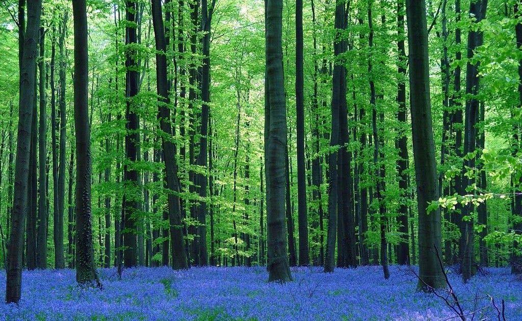 17 Pemandangan Indah Hutan 8 Hutan Indah Di Seluruh Dunia Bagai Di Negeri Dongeng Download Gambar Pohon Jalan Outdoor Mena Di 2020 Pemandangan Lanskap Blue Lagoon