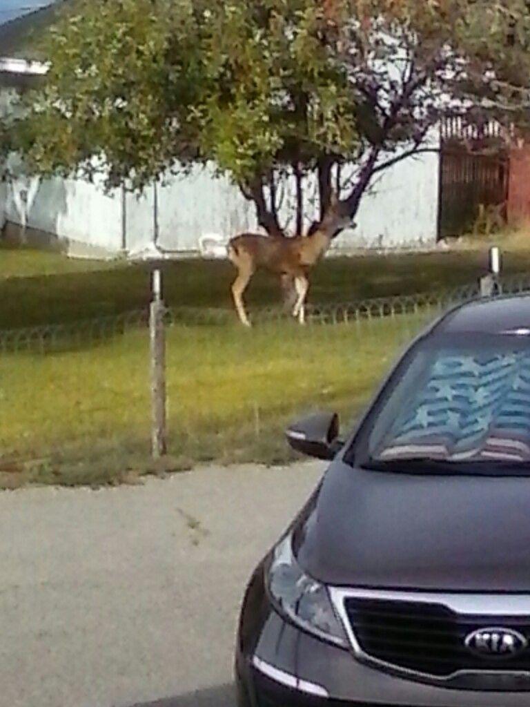Deer image by barbara lawrence deer car vehicles