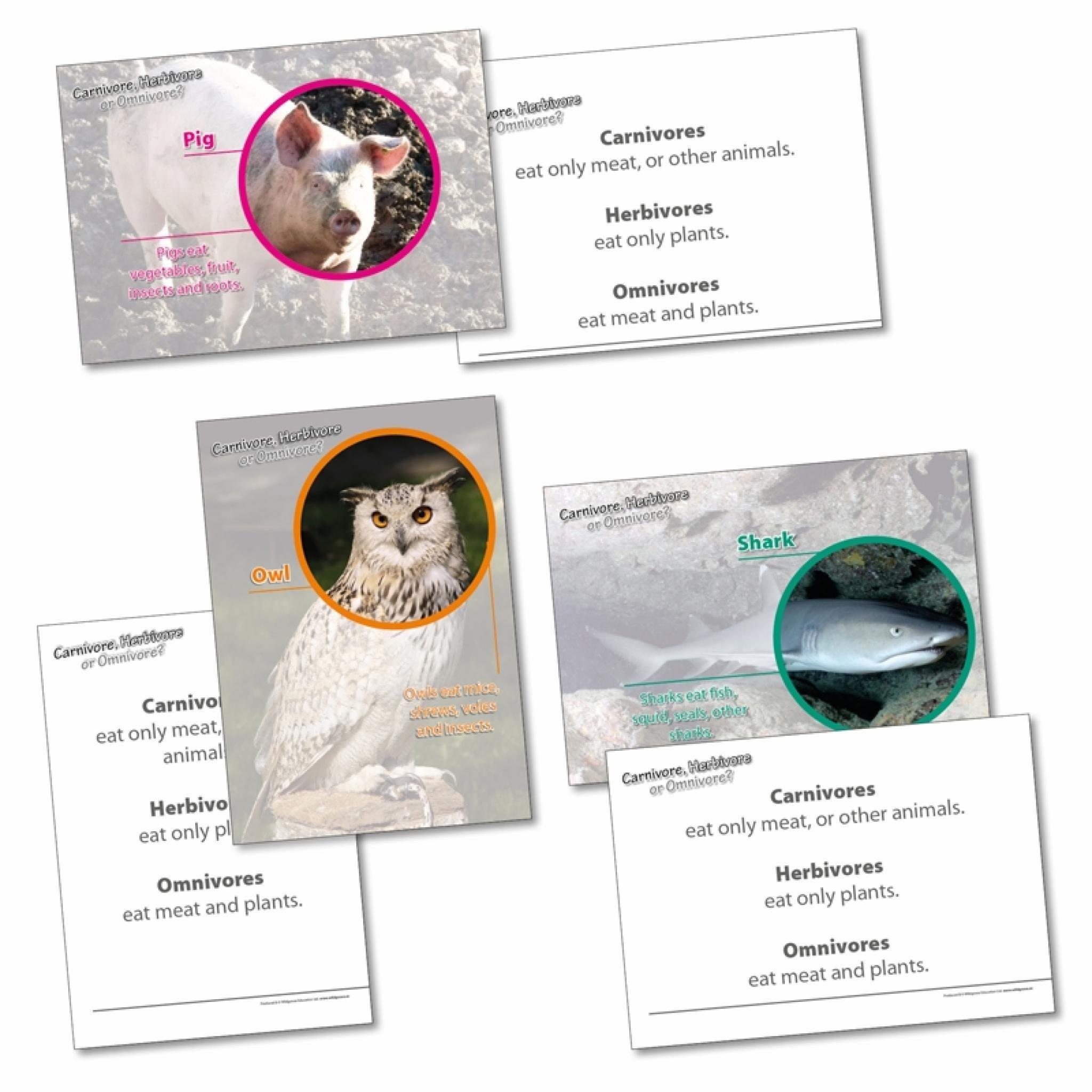 Herbivore Or Omnivore Cards