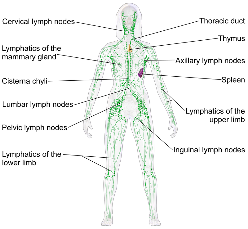 How To Do A Self Lymphatic Massage  And Get A Full Body -5568