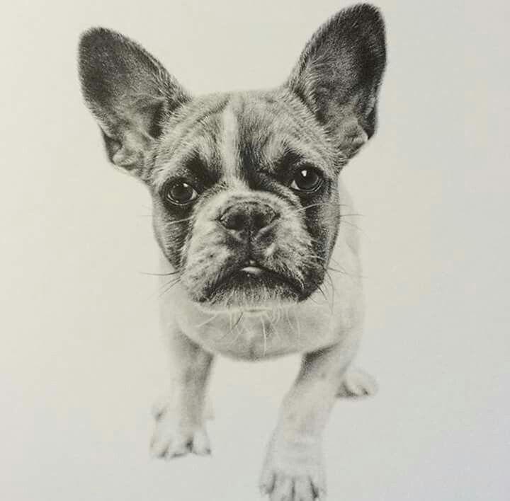 Pin by Linda Gaddy on Dog Art Dog art, Animals, Dogs