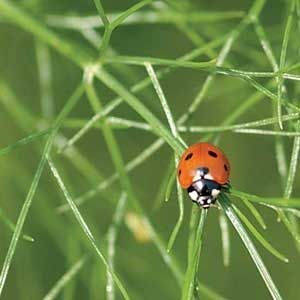 The Most Common Beneficial Insects