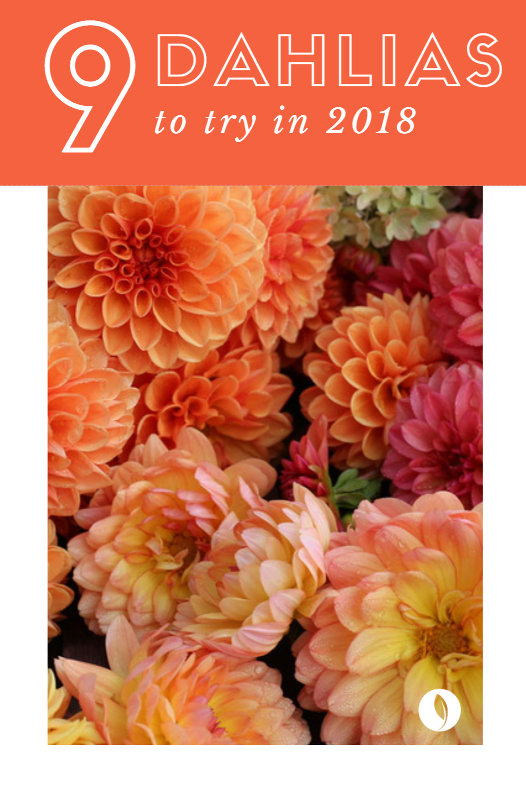 New dahlias for 2018 dahlia flower colors and gardens having trouble deciding which dahlia varieties to grow this spring be sure to check out izmirmasajfo