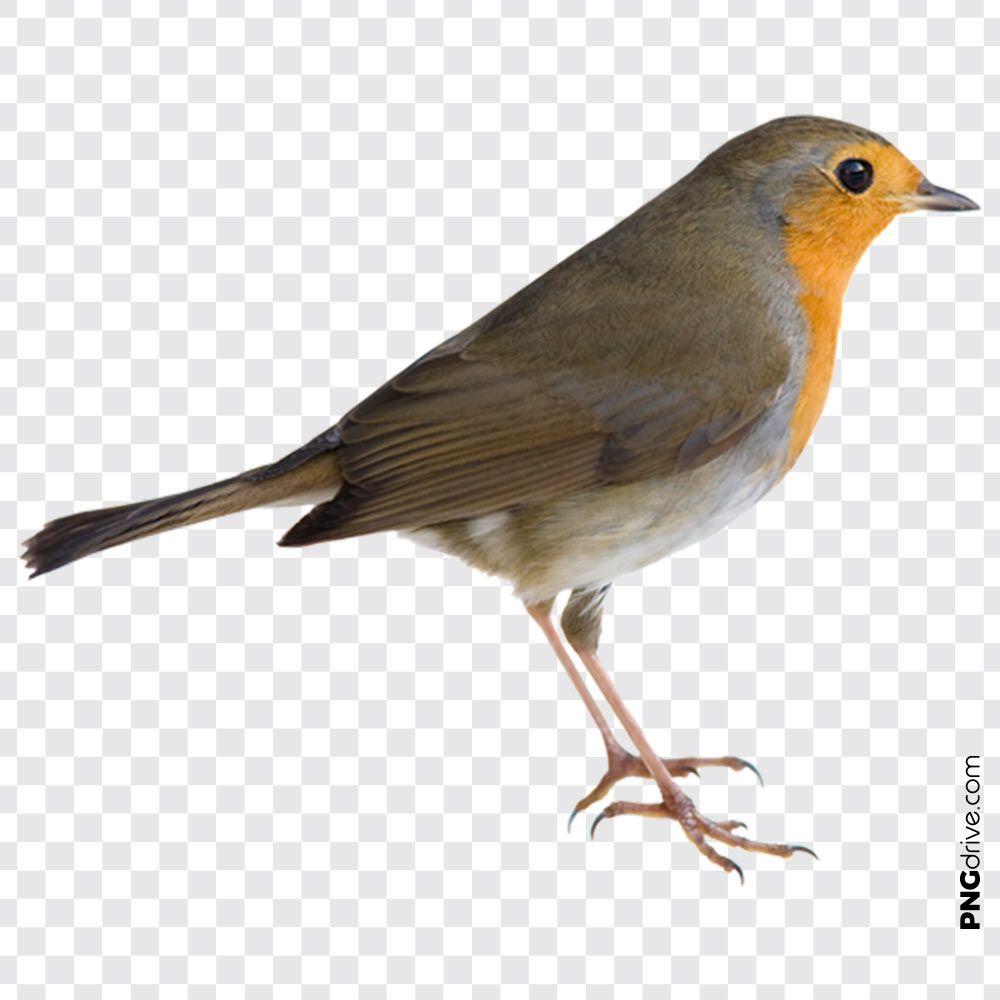 Robin On A Branch Png By Alzstock Deviantart Com On Deviantart Art Greyhound Art Pet Birds