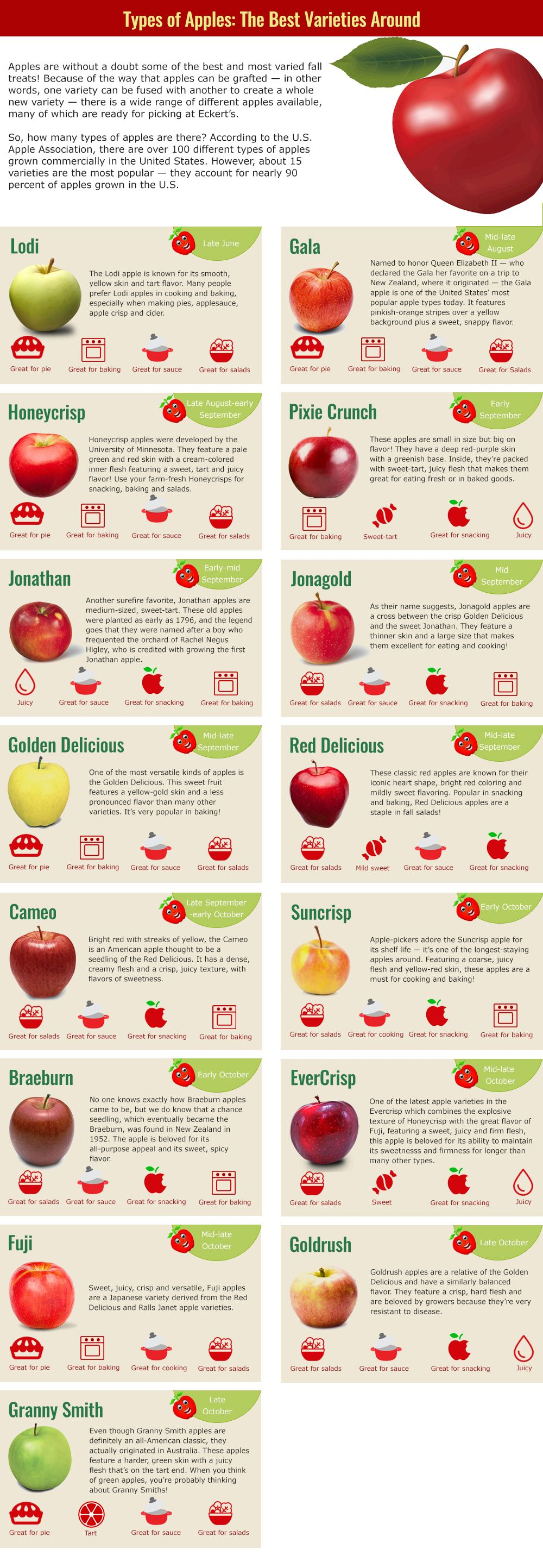 Types of Apples - Apple Varieties - Eckerts.com | Apple ...