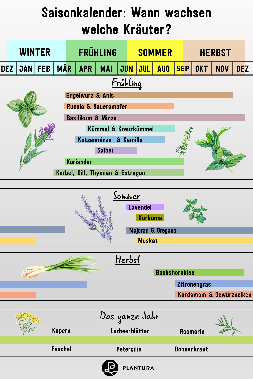 Saisonkalender Wann Wachst Welches Gemuse Obst Plantura In 2020 Saisonkalender Krauter Anpflanzen Krauter