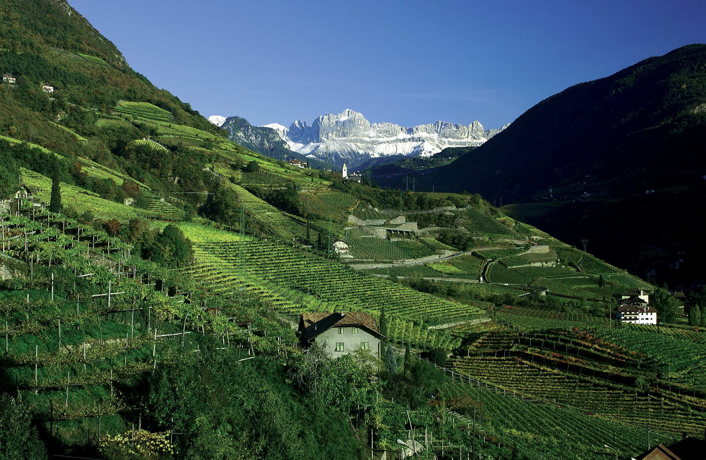 Vineyards in Alto Adige, Delle Venezie region, northern