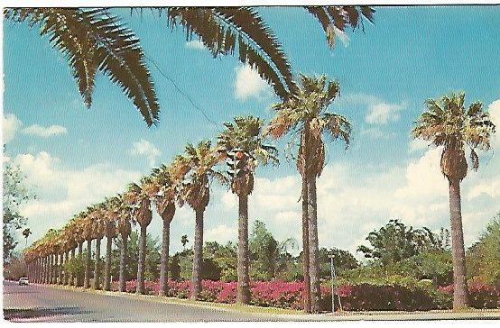 Vintage 1960s Postcard  Ephemera Palms and by postcardsintheattic, $1.99 New Listing: #postcard #ephemera #antique #vintage #vintagepaper #etsy #antiquepaper #collectible #antiquepostcard #vintagepostcard #StreetScenes #OldBuildings #History
