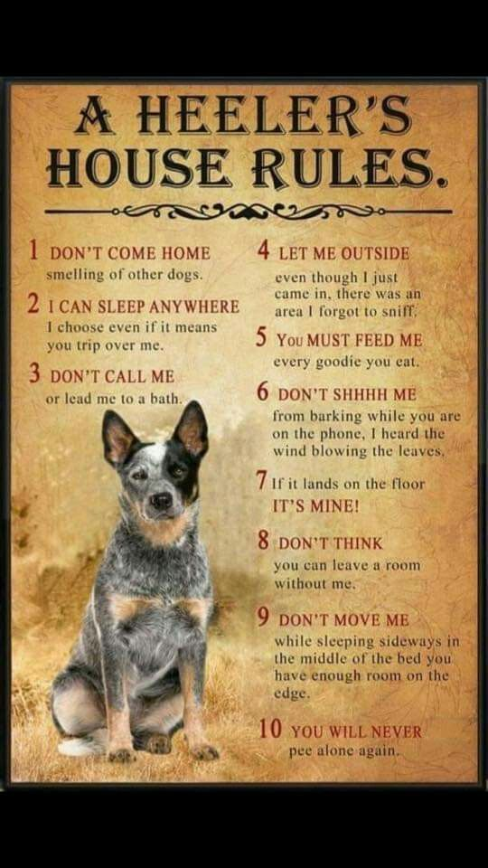 The Truth The Most Interesting Breed Everyday It Amazes Me