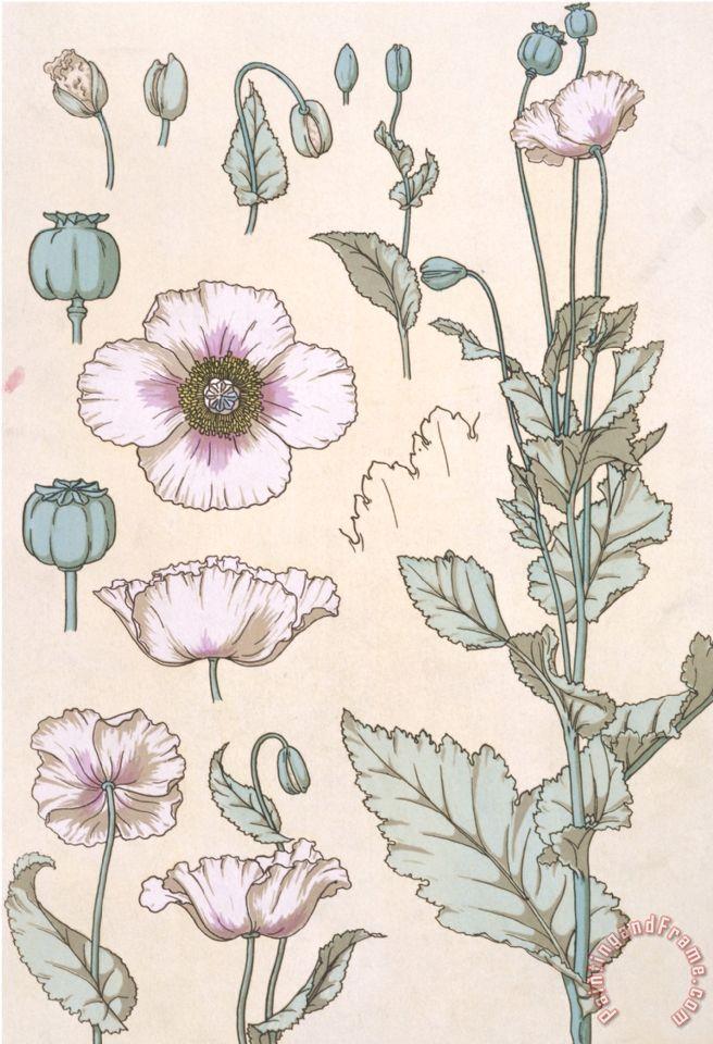 Eugene Grasset Botanical Diagram of a Poppy painting - Botanical ...