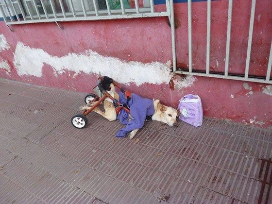 This just made me cry!!! Lunita, the Handicapped Girl in Argentina   Medical Expenses - YouCaring.com