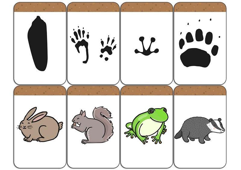 Erdei Allatok Forest Animals Panosundaki Pin