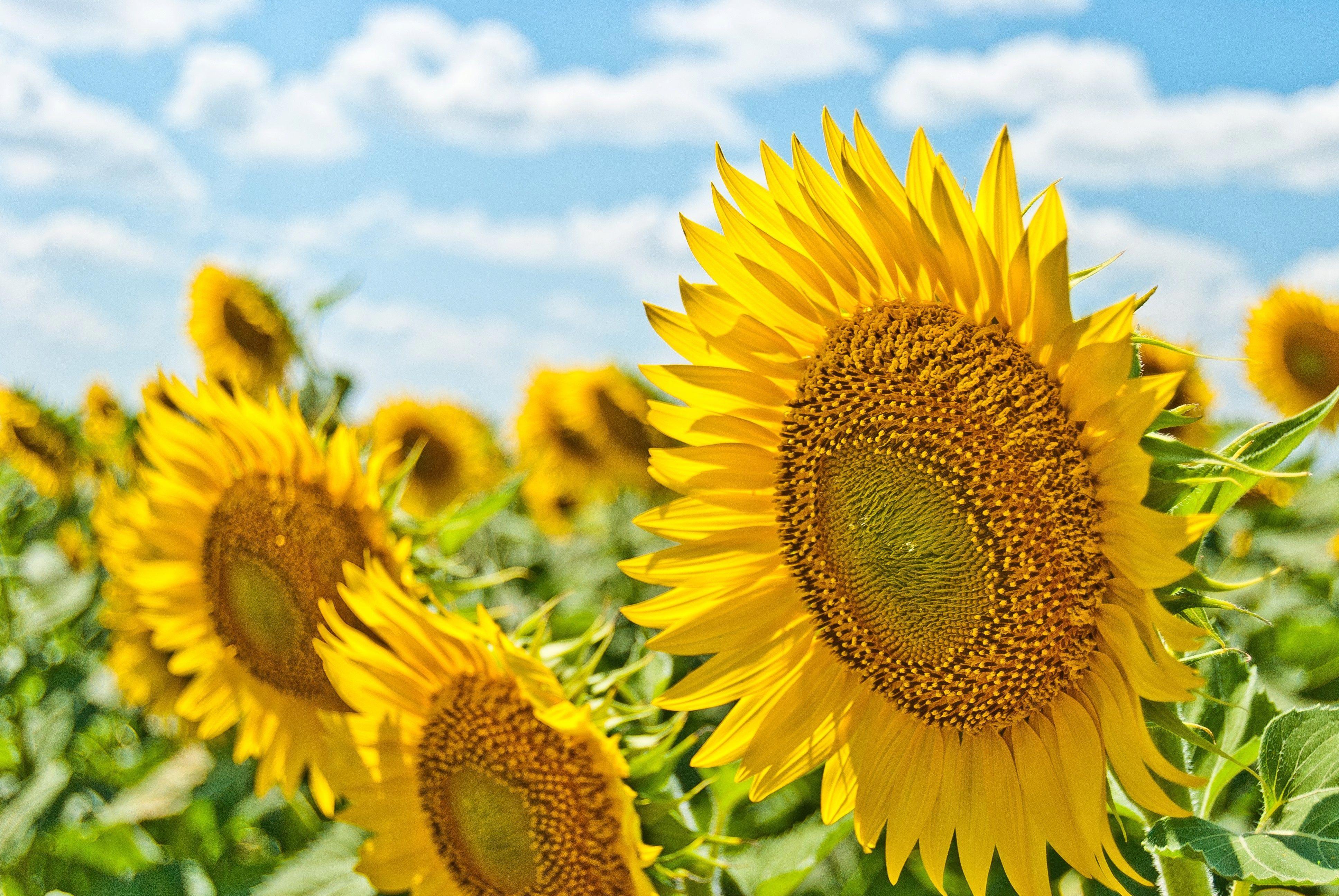 Flowers Sunshine Good Feelings